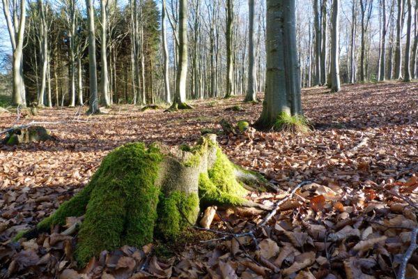 gallery_11_tree_stump-min