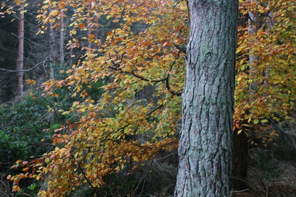 gallery_5_tree_bark-min