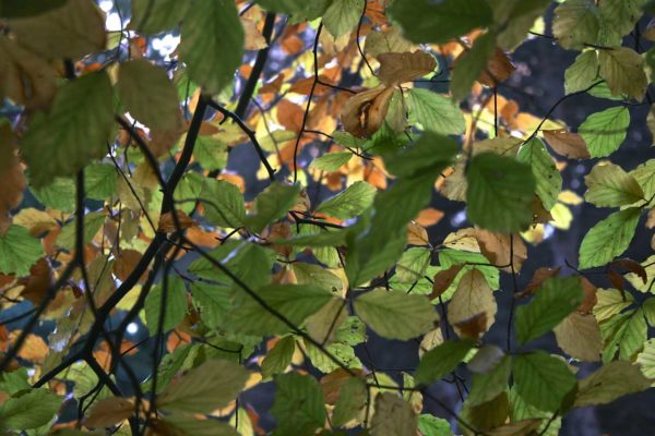 gallery_6_leaves-min